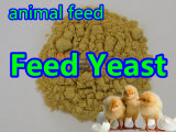 Feed Yeast Powder for Feed Grade