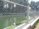Chainlink Wire Mesh Fence/Chainlink Netting