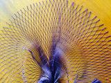Shining and Intensitive Multi Nylon Fishing Net