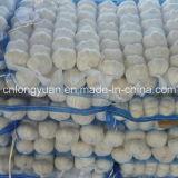 Fresh Normal White Garlic with Mesh Bag
