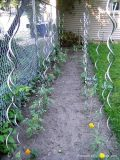 Plant Support/ Tomato spiral Support