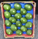 41X33cm Avocado Packaging Blister Fruit Tray Popular Use in Australia Market