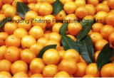 2017 Fresh Orange with Competitive Price