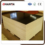 Film Faced Plywood From Chanta
