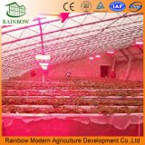 High Efficiency LED Grow Light for Green House