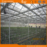 Good Heat Insulation Performance PC Board Multi-Span Greenhouse
