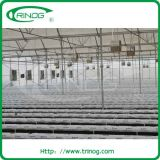 Advanced hydroponics system for tomato cultivation