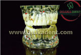 Dental Teaching Model of Teeth Shape