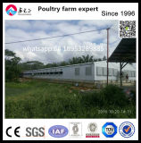 Easy Construction Chicken Farm Use Steel Structure Chicken House