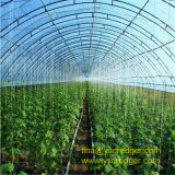 Tempered PVC/PE Film Greenhouse for Vegetable Plantation