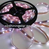 LED Strip and LED Strip Light with Flexible Strip, Strip Light of 5050 and SMD Strip Lamp (XS-5050-MS300PW-RF)