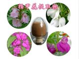 Top Quality Garden Balsam Extract Henna Extract Powder