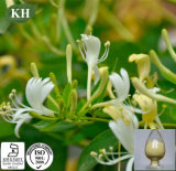 Chlorogenic Acids 98% by HPLC From Honeysuckle Flower Extract