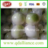 Fresh Peeled White Purple Onion with Vacuum Pack