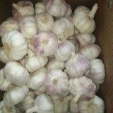2017 Jinxiang New Fresh White Garlic
