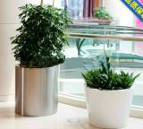 Stainless Steel Flower Planters for Hotel and Apartment