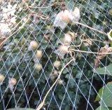 100% New Virgin Green HDPE Extruded Bird Net