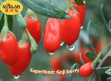 Sunshine Dried Organic Gojiberry Fruit / Chinese Wolfberry