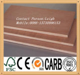 (BB/BB Grade) Commercial Plywood Manufacturer to U. a. E