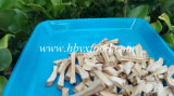 Ad Drying Process Dehydrated Shiitake Mushroom Stem Granules