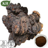 Pure Natural Chaga Mushroom Extract Polysaccharides 20%, 25% by UV