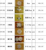 Artificial Sola Flower Scent