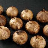 Good Quality Single Black Garlic From Fermentation