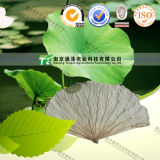 Manufacture Weight Loss Lotus Leaf Extract 2% 5% Nuciferine