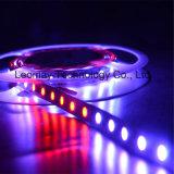 12V Digital Addressable RGB LED Strip Ws2811 60PCS/M