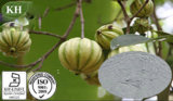 Garcinia Cambogia Extract: Hydroxy Citric Acid (HCA) 50%, 60%
