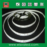 Double-Line SMD 3528 Flexible LED Strip (240LEDs/m)