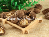 Organic Food Dried Smooth Shiitake Mushroom with Best Price for Wholesale