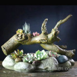 Large Roots Pots Succulents Moss Micro Landscape Desktop