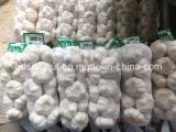 New Harvest Pure White Garlic