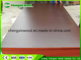 Black/Brown Film Faced Plywood 12, 15, 18mm Poplar Core From Shandong China