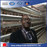Automatic Feeding System for a H Frame Layer Broiler Cage Syetem