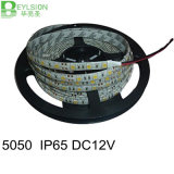 30LEDs/M LED Strip Light 5050 SMD RGB/ Multicolor DC12V IP65