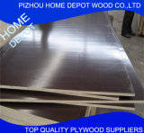 Poplar/Birch/Hardwood Film Faced Plywood for Shuttering