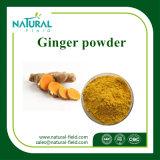 Hot Selling Dry Ginger Powder