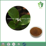 Natural Holarrhena Antidysenterica Extract 5: 1 High Quality