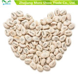 Magic White Bean Seeds Gift Plant Growing Message Word Love Office Home Decoration