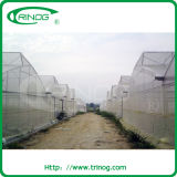 Fixed Roof Vent Plastic Film Greenhouse for commercial