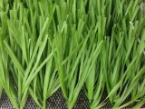 High Quality Monofilament Artificial Grass/Turf for Sports