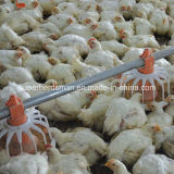 Automatic Poultry Feeding Equipment for Isolated Farm