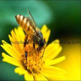 100%Natural Bee Pollen