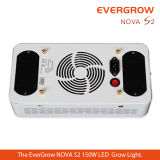 2014 Evergrow New Modular LED Grow Light for Greenhouse and Medicine