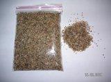 Salicornia Seeds -1