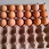 Agricultural Farming Different Trays Cheap Egg Incubator for Sale