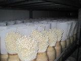 Mushroom Grow Room