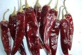 Paprika (SWEET PAPRIKA)